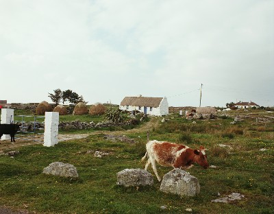 C1916 - Connemara Cottage and Cattle, Cashel